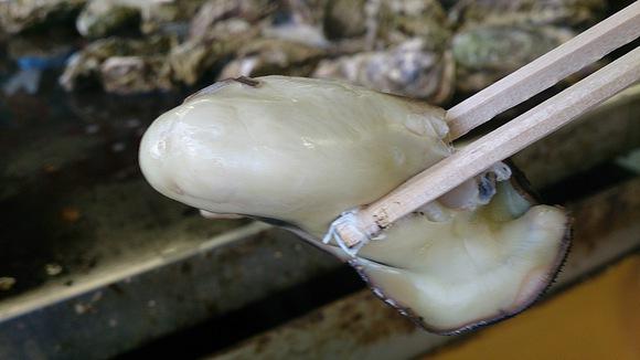岩手県 大船渡市 大船渡湾 かき小屋 漁師 食べ放題 カキ 牡蠣