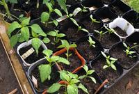 5月の野菜市開催日のお知らせ