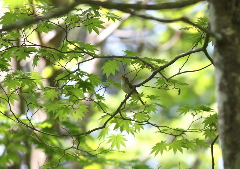 きららの森の新緑