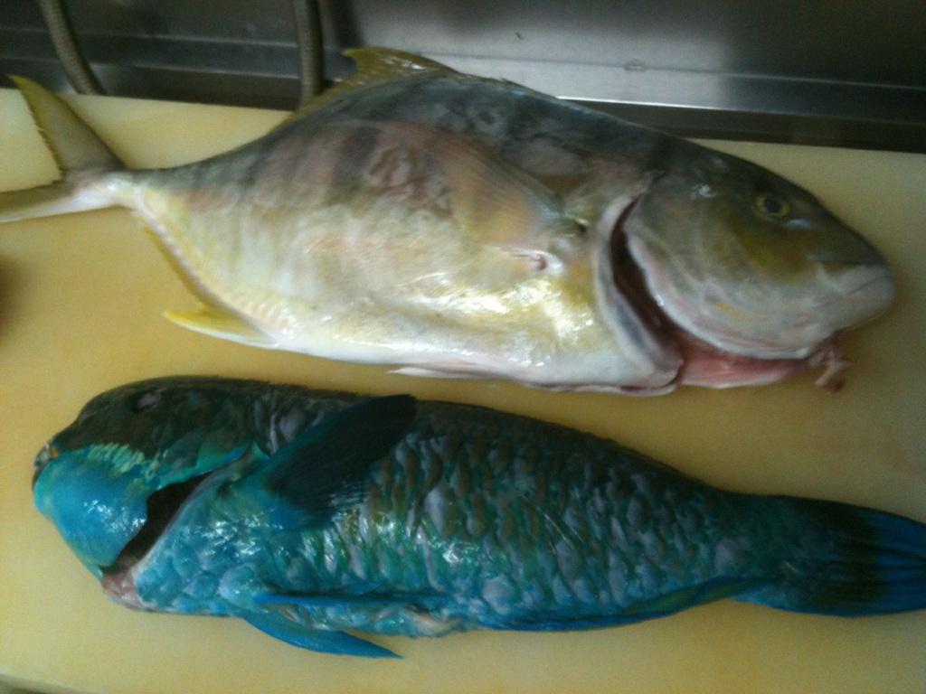 魚料理専門店 魚魚一(浜松/浜名湖 和食全般)のグ …