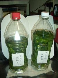 《作り方 手作り》アロエ化粧水の作り方:ほおりんちゃんのうた ...